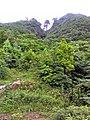 惠州博罗红花嶂越野穿越-大救援20140524-25 - panoramio (13).jpg