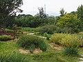 本草园 - Medical Plants Garden - 2013.09 - panoramio.jpg