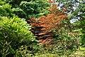 東高根森林公園 - panoramio (36).jpg
