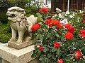 橿原市小房町 「おふさ観音」のバラの花 Rose of Ofusa-kannon 2011.5.26 - panoramio.jpg
