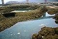 红水河风光 - panoramio.jpg