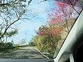 自強道路 Ziqiang Road - panoramio.jpg