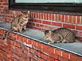 貓 Street Cats - panoramio.jpg