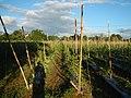 0203jfLandscapes Maronquillo Rice Vegetables Fields San Rafael Bulacan Roadsfvf 03.JPG