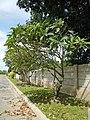 0248jfVentinilla Cabayaoasan Nancamarinan Fields Roads Paniqui Tarlacfvf 21.JPG