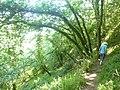 040 Forêt Landévennec.jpg