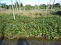 0581jfLandscapes Roads Vegetables Fields Binagbag Angat Bulacanfvf 20.JPG