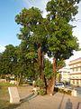 08635jfProvincial Capitol Boulevard San Fernando City Pampangafvf 04.jpg
