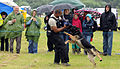 100th SFS wows spectators with working dog demo 120708-F-UA873-375.jpg