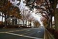 171103 Chuo-dori Morioka Iwate pref Japan03n.jpg