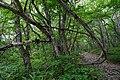 180727 Nasu Heisei-no-mori Forest Nasu Japan08.JPG