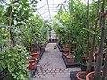 2006-09-02 Botanischer Garten provisorisches Tropenhaus.jpg
