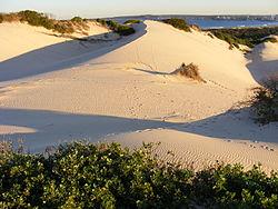 Cronulla sand dunes  Wikipedia