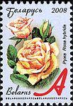 2008. Stamp of Belarus 11-2008-06-10-roza.jpg