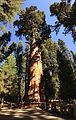 2013-09-20 11 06 10 General Sherman Tree.JPG