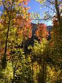 2014-10-05 14 55 31 Aspens during autumn foliage coloration in Lamoille Canyon, Nevada.JPG