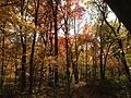 2014-10-30 12 38 34 Trees during autumn in the woodlands along the West Branch Shabakunk Creek in Ewing, New Jersey.JPG