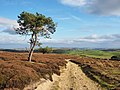2014 Track on Fremington Edge.jpg