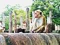 20160124 Sri Lanka 3753 Polonnaruwa sRGB (25140369934).jpg