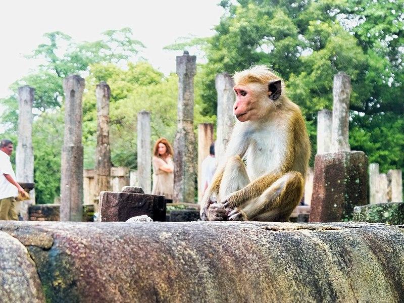 Bestand:20160124 Sri Lanka 3753 Polonnaruwa sRGB (25140369934).jpg