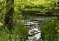 2017-05-16 Naturdenkmal Weiher 1.jpg