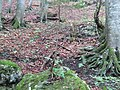 2018-08-11 (185) Nature at Tirolerkogel, Annaberg, Austria.jpg