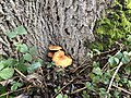 2020-12-12-Hike-to-Rheydt-Palace-and-its-surroundings.-Foto-37.jpg