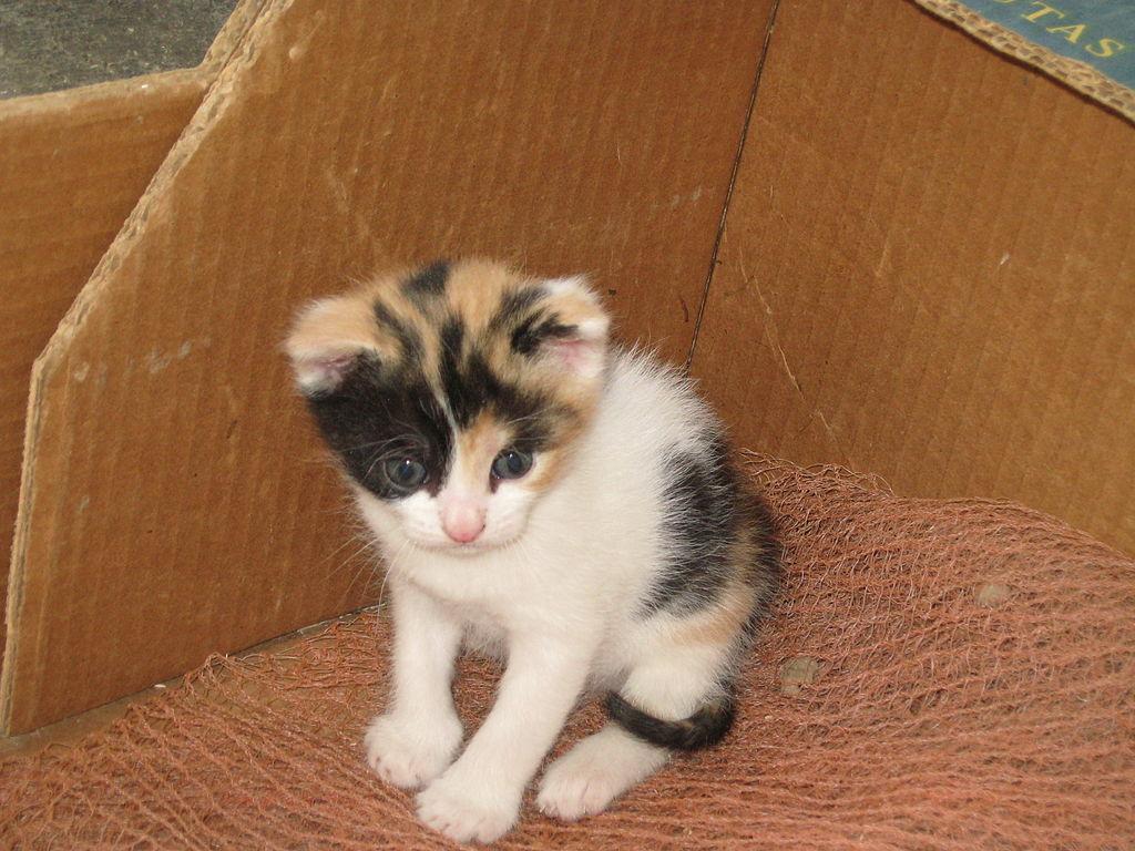 cat breed types