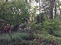 5 Chome Jindaiji Motomachi, Chōfu-shi, Tōkyō-to 182-0017, Japan - panoramio (26).jpg