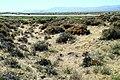 A-17. The California Trail (Oreana, NV) on the California National Historic Trail (2008) (a4f1f734-7d88-4c33-8b41-65c6cf82a8e9).jpg