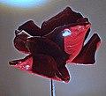 A Poppy for Albert (15845172356).jpg