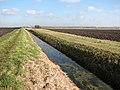 A ditch in Downham Fen - geograph.org.uk - 1734534.jpg