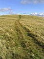 A grass track leading up to Snouthead - geograph.org.uk - 541557.jpg