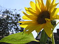 Ab plant 1304.jpg