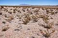 About two miles northwest of Cuchillo - Flickr - aspidoscelis (1).jpg