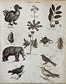 Above, a dodo, a venus flytrap, two plants, a shell, a flyin Wellcome V0020667EL.jpg