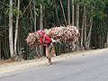 Addis Abeba-Collines d'Entoto (12).jpg