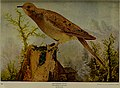 Alabama bird day book (1918) (14754901682).jpg