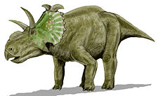 Illustration av Albertaceratops