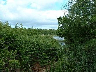 Norfolk Wildlife Trust - Image: Alderfen Broad geograph.org.uk 24693