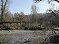 Allodon nov 2012 24 (8210709153).jpg