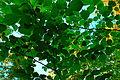 Almeblader.jpg