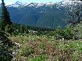 Alpine meadow, Blackcomb Mountain (6124208030).jpg