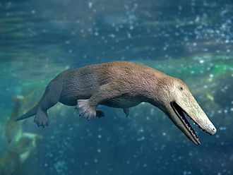 Ambulocetidae - Ambulocetus swimming