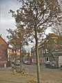 Amsterdam - Van der Pekbuurt IX.jpg