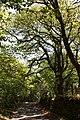 An Exmoor Lane in Spring (9120487966).jpg
