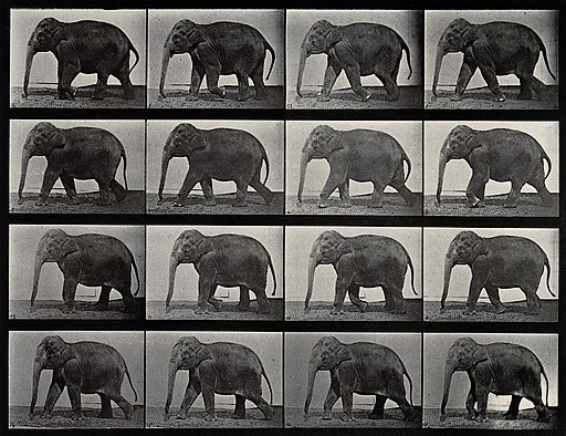 An elephant walking. Photogravure after Eadweard Muybridge, Wellcome V0048775