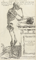 Andreae Vesalii Bruxellensis Wellcome L0063835 cropped.png