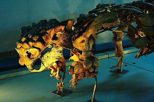 File:Ankylosaur.jpg