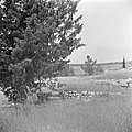 Antieke grafkelder bij Abu Gosh, Bestanddeelnr 255-1446.jpg